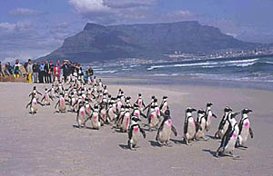 Happy pink penguins